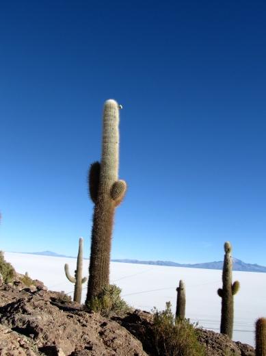 Ile de Castus - Salar de Uyuni